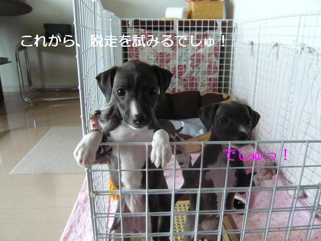 縺阪<繝サ縺ソ縺ゥ繧垣convert_20120606133444