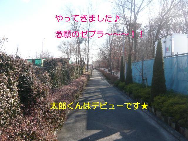 P1060180_convert_20120112091608.jpg