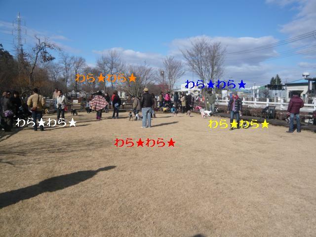 P1060185_convert_20120112091824.jpg