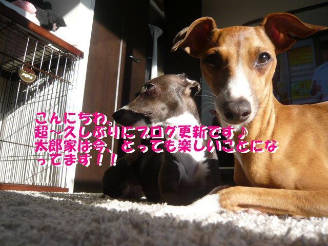P1060241_convert_20120409094027.jpg