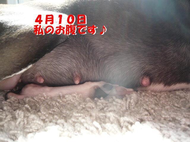 P1060341_convert_20120414183301.jpg