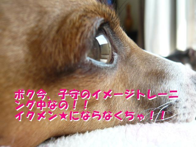 P1060361_convert_20120414183457.jpg