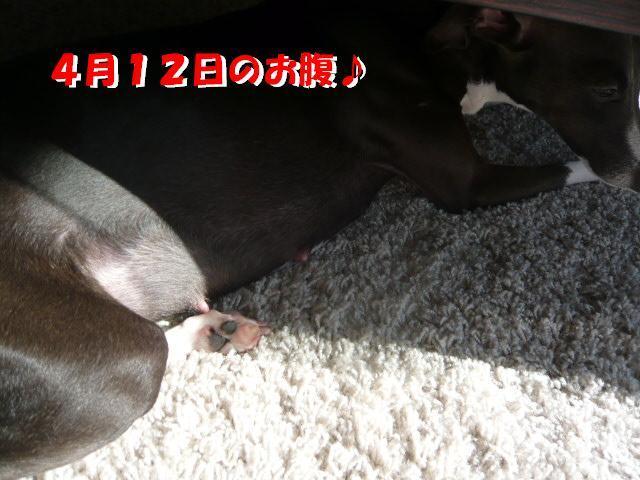 P1060366_convert_20120414183559.jpg