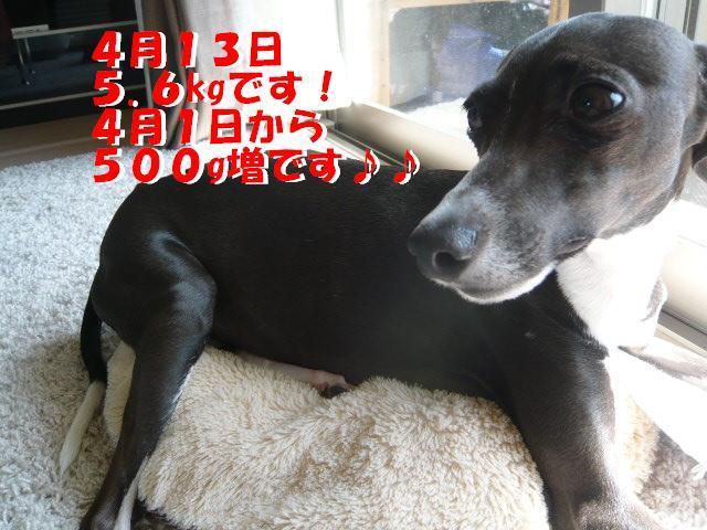 P1060372_convert_20120414183632.jpg