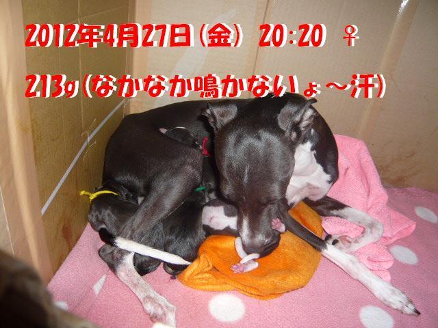 P1060498_convert_20120429095509.jpg