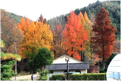 三徳園の紅葉