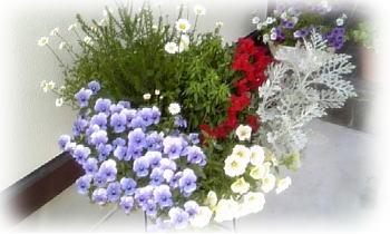 花盛り♪1