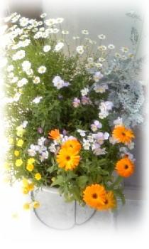 花盛り♪2
