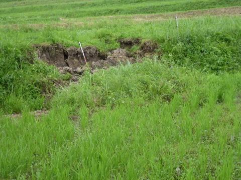 畦が崩れた