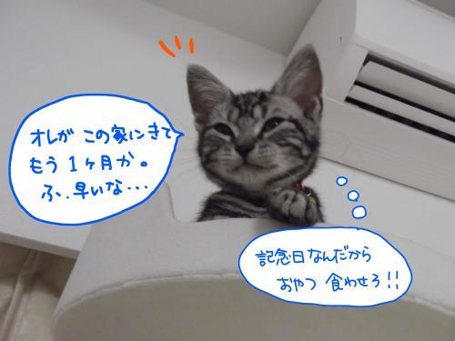 おめでとう3カ月1SCF0407_convert_20110727094059