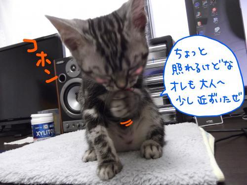 おめでとう3カ月3DSCF0412_convert_20110727094313