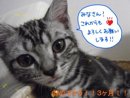 おめでとう3カ月4DSCF0401_convert_20110727094406