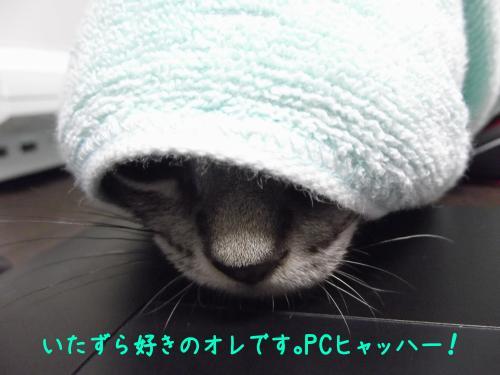 いたずら1DSCF0459_convert_20110801134940
