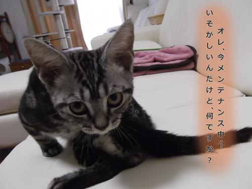 お風呂上がり3convert_20110813083124