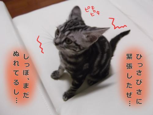 お風呂上がり4convert_20110813083211