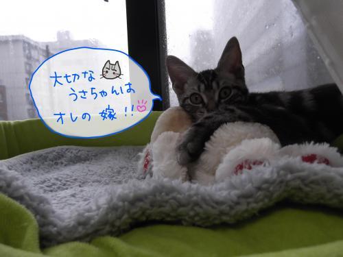 おれのうさちゃんconvert_20110821142345