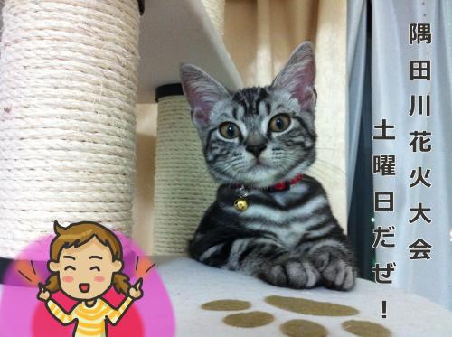 花火3IMG_0416_convert_20110823201846