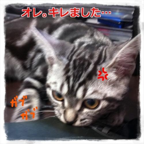 メルクン恐怖2convert_20110905215044