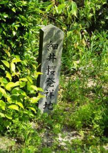 細井桜発祥の地