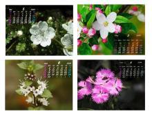 カレンダー5月6月