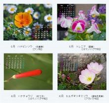 はまだより雑記帳-2012/5-6 cal