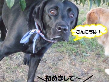007_convert_20111216233823.jpg