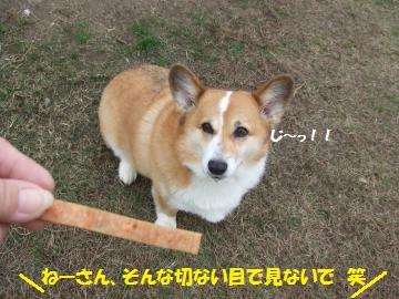 008_convert_20111124231555.jpg