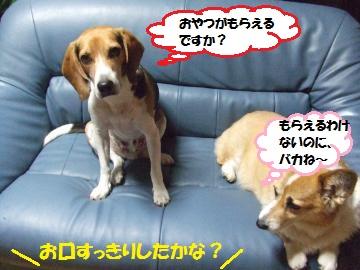 011_convert_20111102002910.jpg