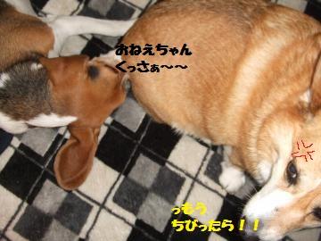 011_convert_20120301235001.jpg