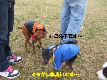 013_convert_20120306021946.jpg