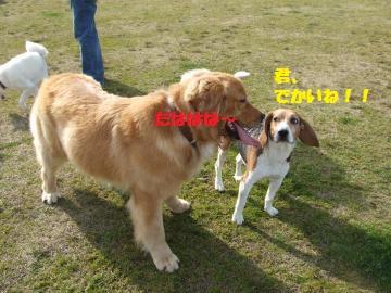 014_convert_20120331012728.jpg