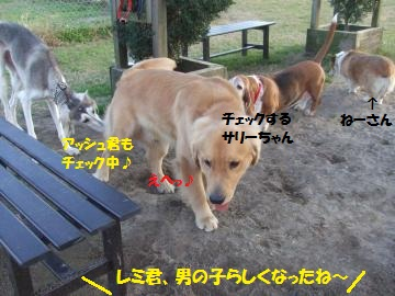 015_convert_20111217023720.jpg