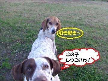 016_convert_20111122003422.jpg