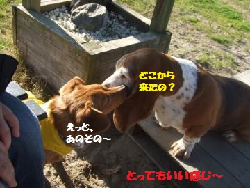017_convert_20111224035721.jpg