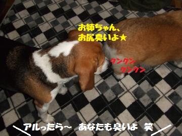 020_convert_20120317001841.jpg