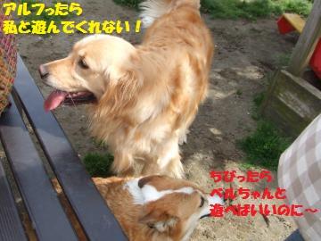 020_convert_20120418004201.jpg