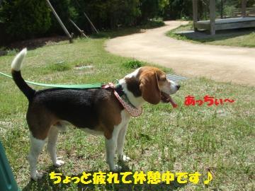 020_convert_20120506224903.jpg