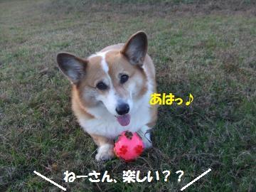 021_convert_20111122003539.jpg