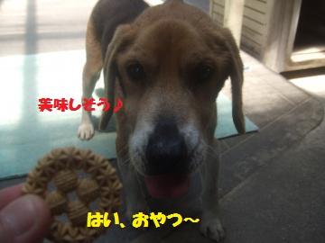 021_convert_20120520031459.jpg
