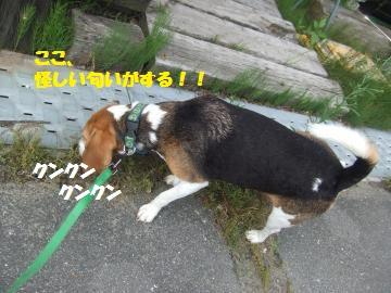024_convert_20120716220500.jpg