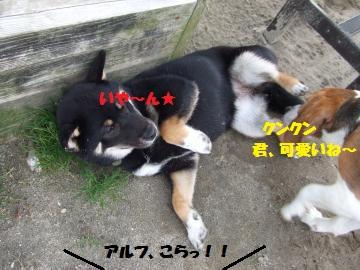 029_convert_20120418004329.jpg