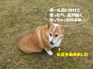 030_convert_20120309233116.jpg