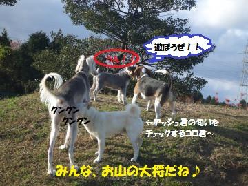 031_convert_20111208235901.jpg