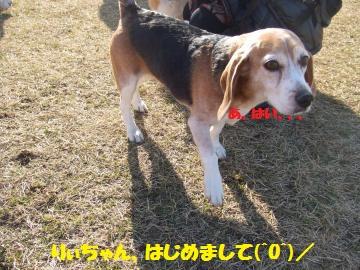 034_convert_20120213225230.jpg