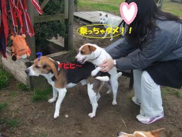 037_convert_20111208235409.jpg