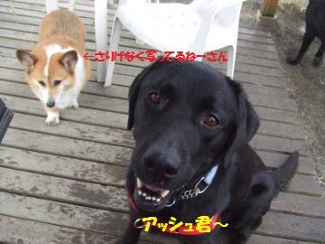 039_convert_20111030210243.jpg