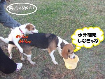 039_convert_20111122003751.jpg