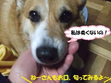 039_convert_20111213010142.jpg