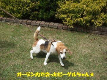 039_convert_20120506224507.jpg