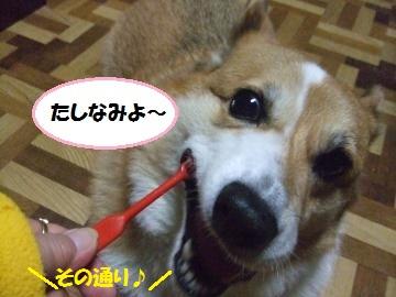 040_convert_20111112013643.jpg